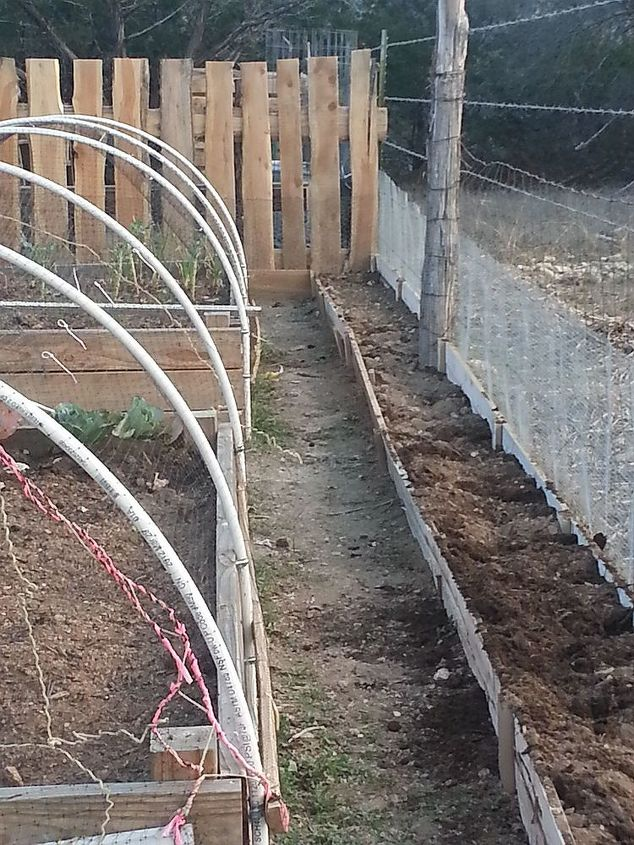 I wish I had left more room between beds.  I still need to scrape the walkway better here.  I planted 2 grape vines and wildflowers along the fence.  Notice the snake/bunny fence.  A  must out here.