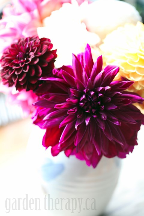 I have some tips for you that will keep your flowers looking their best for as long as possible.