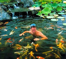 Backyard Ponds Make Fish Keeping Fun, Outdoor Living, Ponds Water Features,  Swimming With