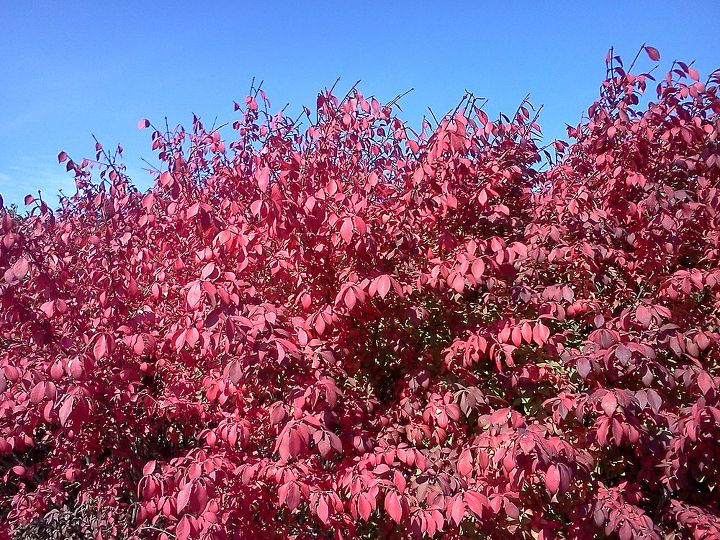 Another view of Burning Bush