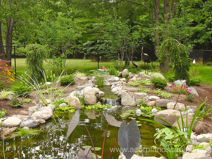 Ecosystem ponds garden ponds fish ponds landscape ponds for Garden pond design books