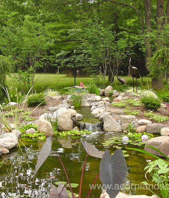 Water Garden Maintenance in Rochester NY