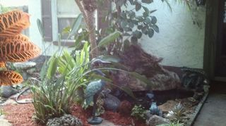 q koi pond care, outdoor living, ponds water features, This is the entry to my ft door koi pond water fall Florida