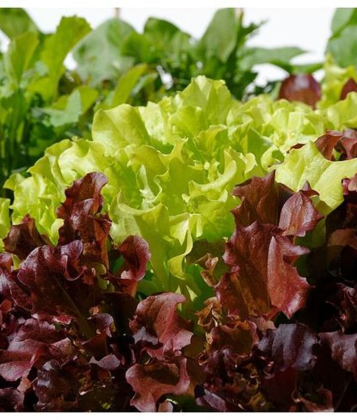 Inspect known entities that seem to be in good condition. This lettuce is a keeper.
