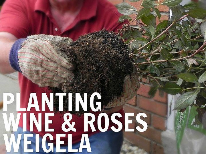 Planting Wine & Roses Weigela  http://www.madincrafts.com/2013/07/planting-wine-and-roses-weigela.html