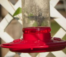 q how do i keep the ants away from my hummingbird feeders, gardening, pest control, Can you see the Humming bird hiding from me It s like he s playing peek a boo I C an ant or 2 on the also