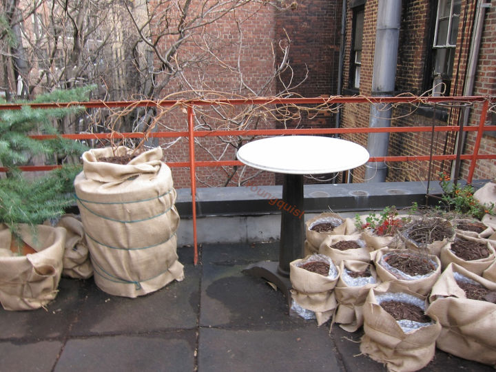 Wrapping Year Two. Winter Season 2010-11. The large container to the left was the home of my kiwi vines which they out grew in the spring of that year @ http://www.thelastleafgardener.com/2012/06/if-its-tuesday-it-must-be-tumblr-week_1