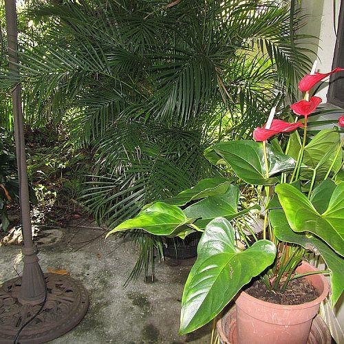 BACK YARD,MORE PLANTS THAT I LOVE.