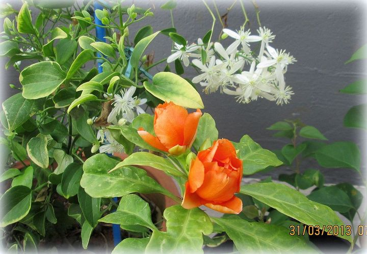 Rose cactus with Bridal bouquet.