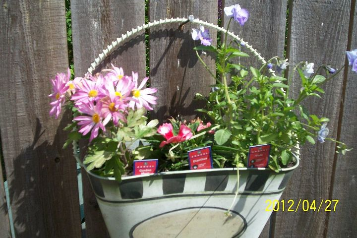 q flowers i have, flowers, gardening, a hanging planter on my fence