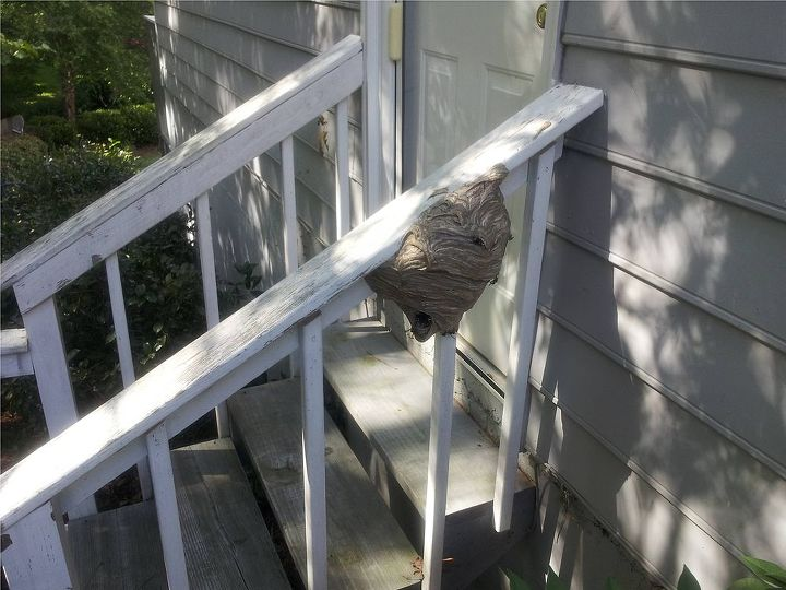 A monster wasp nest in Kennnesaw