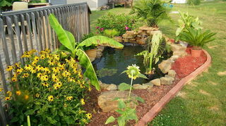 replacing pondless waterfall, outdoor living, ponds water features, Koi Pond Watergarden