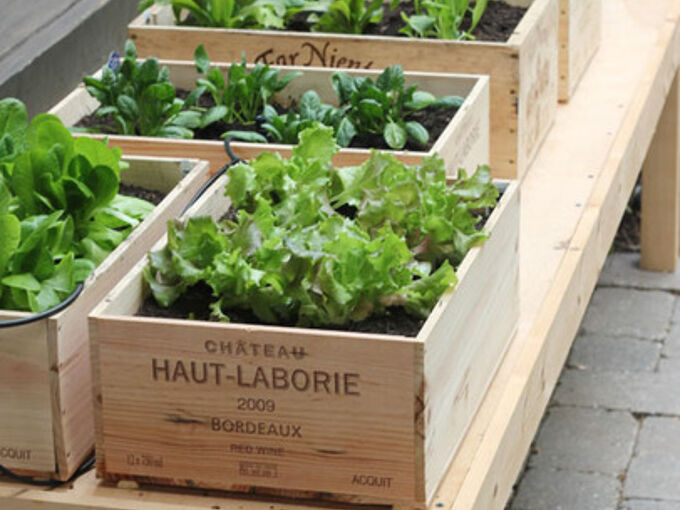 how to set up your garden in your home or apartment, container gardening, flowers, gardening, homesteading, terrarium, urban living