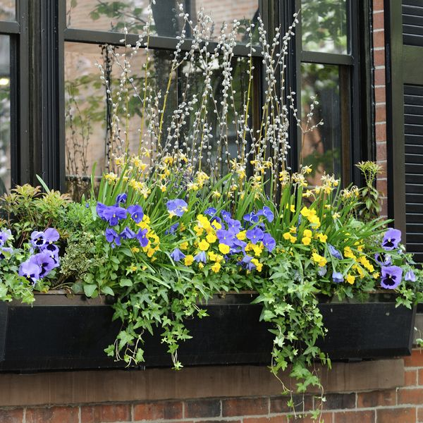 here are 10 ways to add curb appeal to your home in a weekend, curb appeal, flowers, gardening, real estate, Window Boxes under a window filled with flowers adds instant color to the exterior of a home