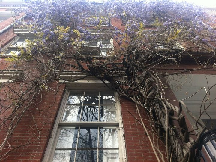 spring time in new york city, curb appeal, urban living, windows