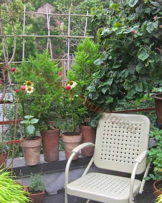 Echinacea (the flowers seen at the base of the trellis) have been featured in one of my garden themed Virtual Stories @ http://vimeo.com/35213748 AS WELL AS IN A NUMBER OF POSTS ON BLOGGER @  http://www.thelastleafgardener.com/search/l