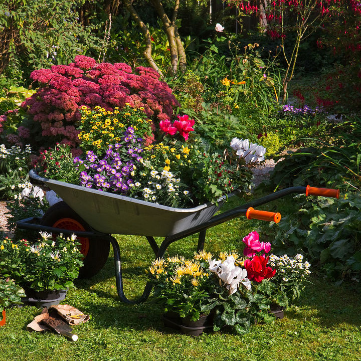 newbie gardening mistakes to avoid, flowers, gardening