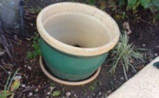 what to do with huge heavy plant pots, gardening, huge heavy plant pot