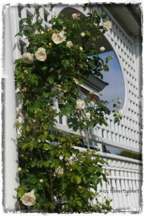 my home, gardening, outdoor living