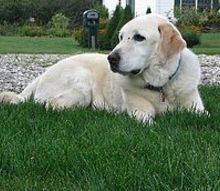 farewell to my great friend amp companion, pets animals, My champion