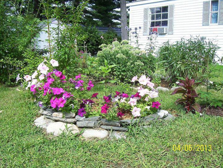 my garden flowers, flowers, gardening
