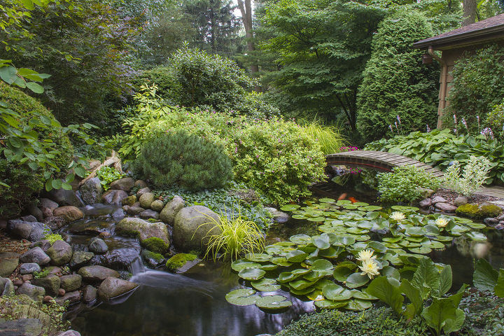 4 tips for success with aquatic plants, gardening, ponds water features