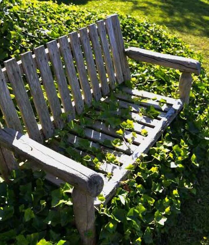 My fav garden cheat was to place the bench into the ivy so I didn't have to move it to mow the lawn. Looks really cool! http://www.funkyjunkinteriors.net/2013/07/ivy-covered-garden-bench.html