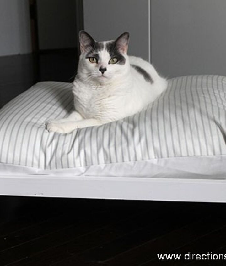 Happy cat showing off her midcentury style pet bed.