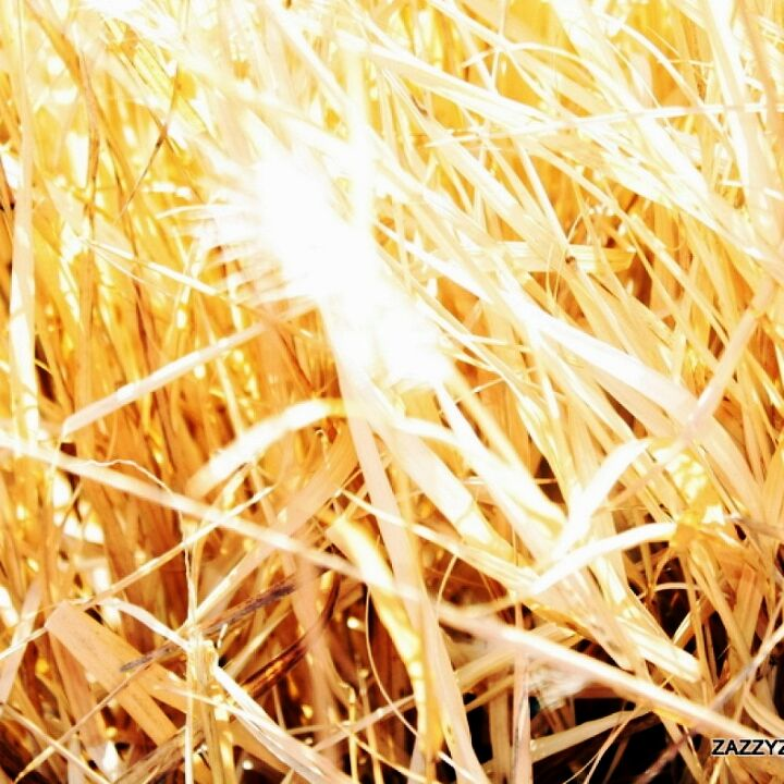 Ornamental grass has lost its warm color, but this golden hue reflecting the sun is just as pretty to me.