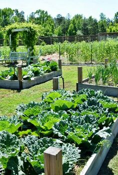 our vegetable garden, container gardening, gardening, raised garden beds, We have 12 raised beds