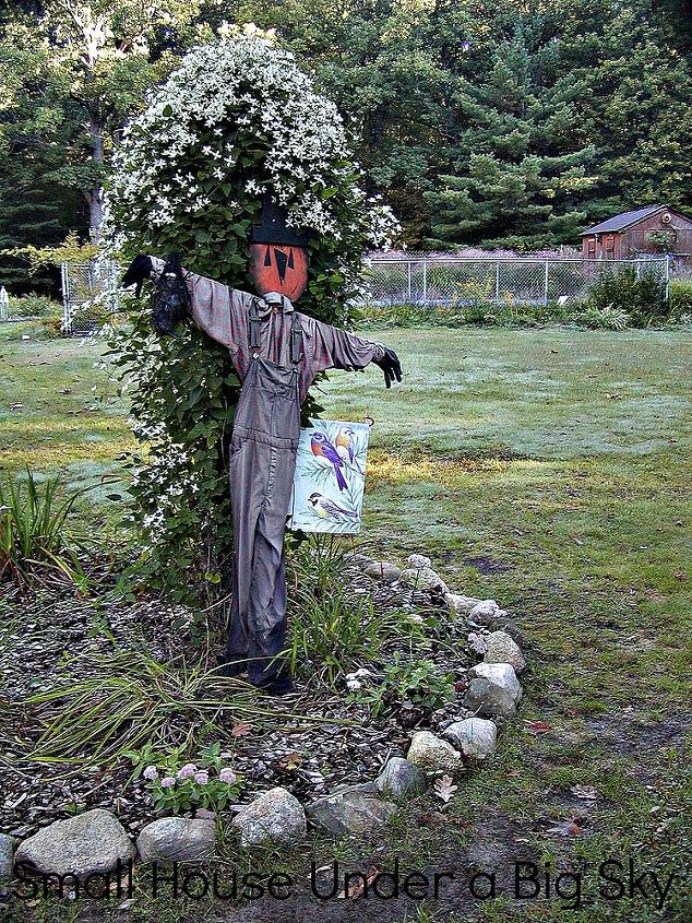 Scarecrow in the bird feeding bed with the autumn climatis in bloom.