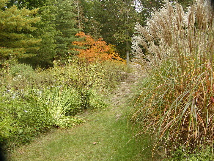 Ornamental grasses to the right and the meadow garden to the left, with walking path in between provides cover and seeds for the songbirds.
