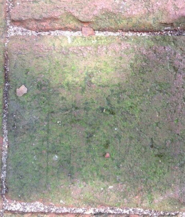 Mold/mildew on brick patio
