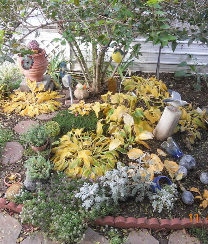 cleaning up garden for winter, flowers, gardening