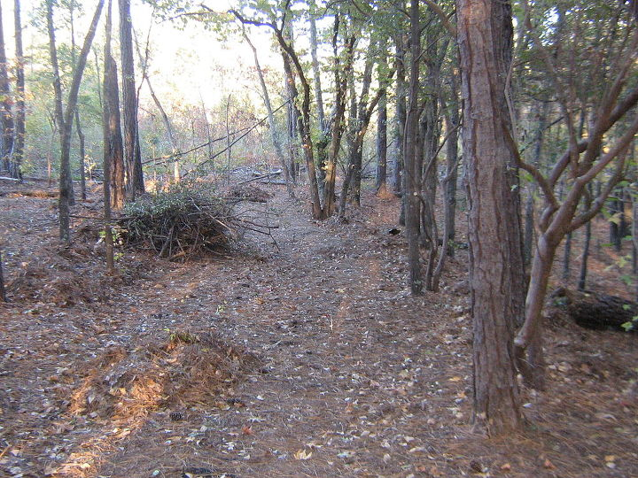 wooded slope needs attention, landscape, See the piles of debris