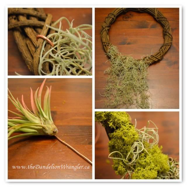Air plants are quite adaptable. You can attach them to almost anything. Creating a very modern planting for your home.