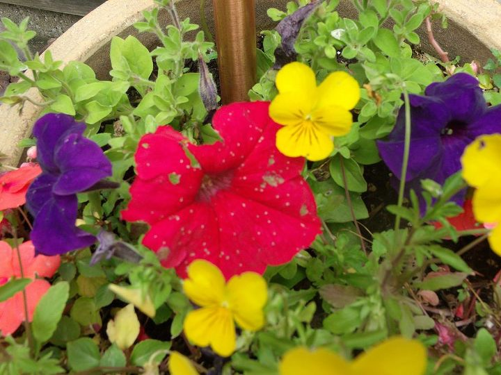 white spots, gardening