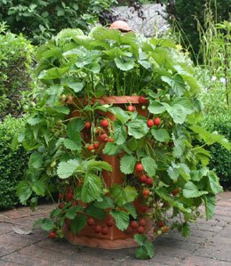 Use a pot on your deck or patio