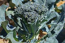 preserve the harvest series let s talk broccoli, flowers, gardening, homesteading