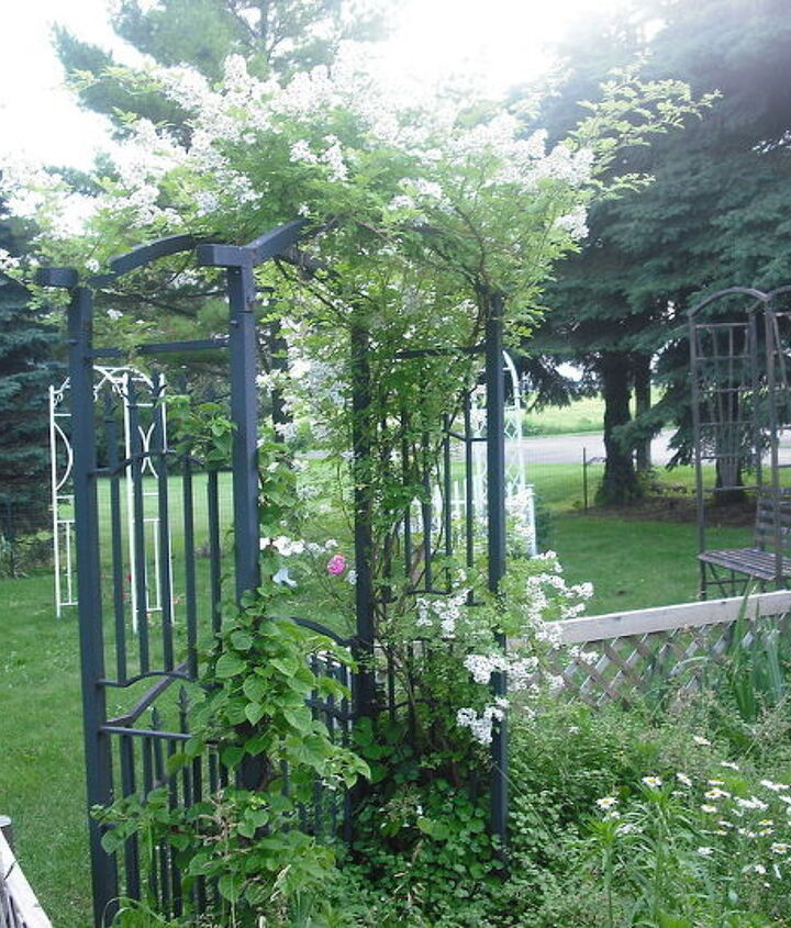 I brought this arbor with me but could not dig up the wild rose