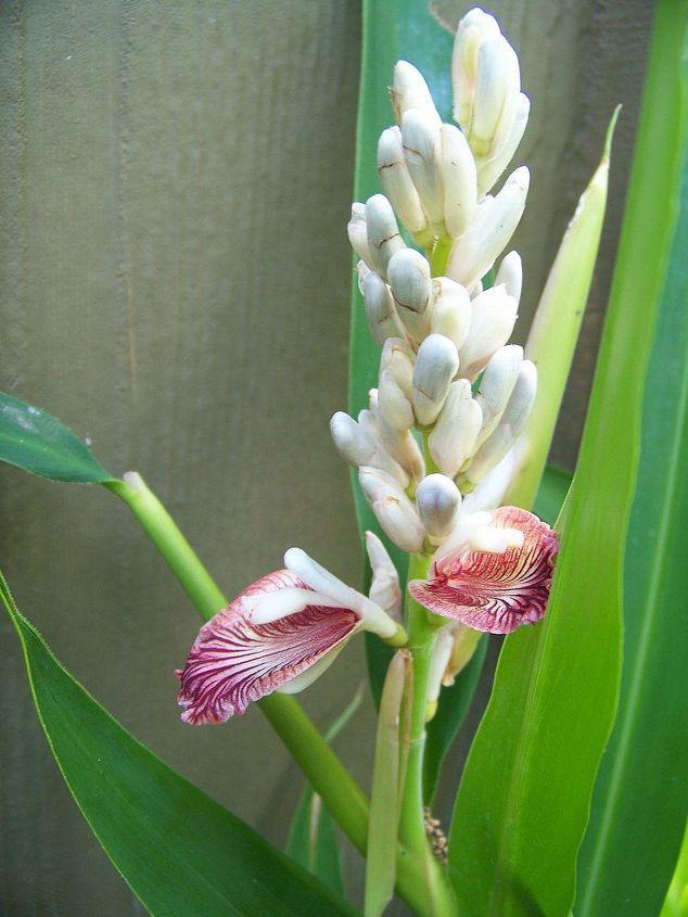 q some type of palm, gardening
