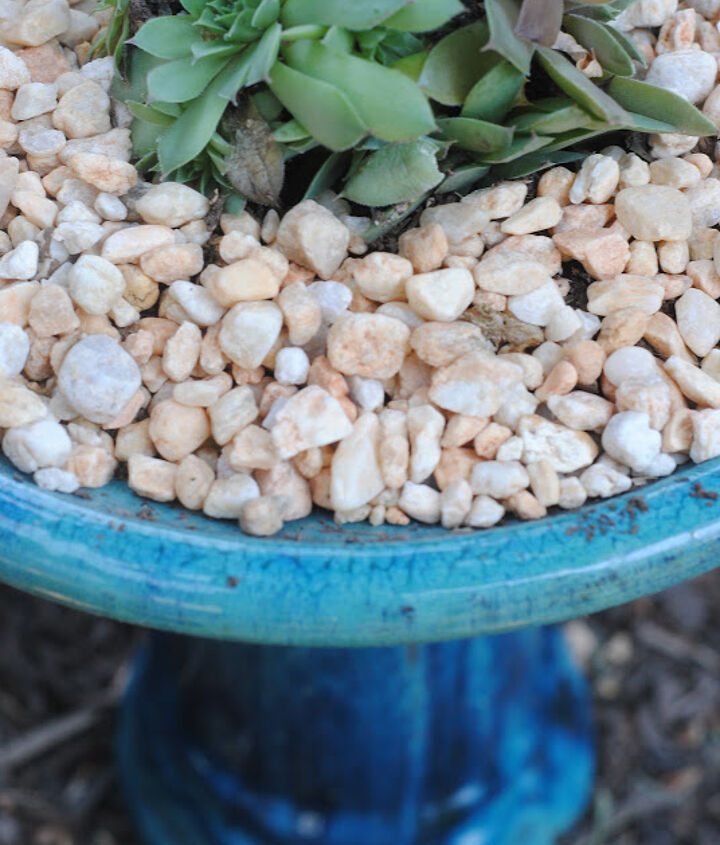 Get funky.  I planted this succulent in some gravel and soil in a birdbath.  Just be sure to avoid extreme temps and don't let it gather too much water if you do this outside.