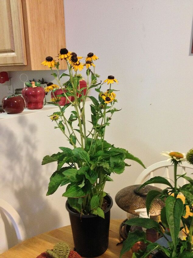 discounted plants, flowers, gardening