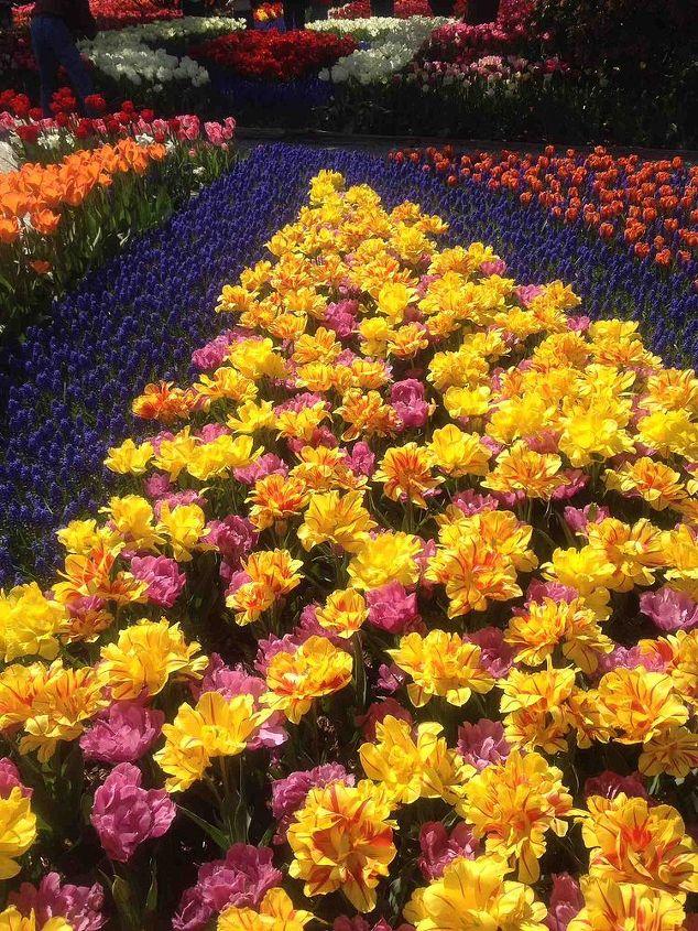 RoozenGaarde display garden.