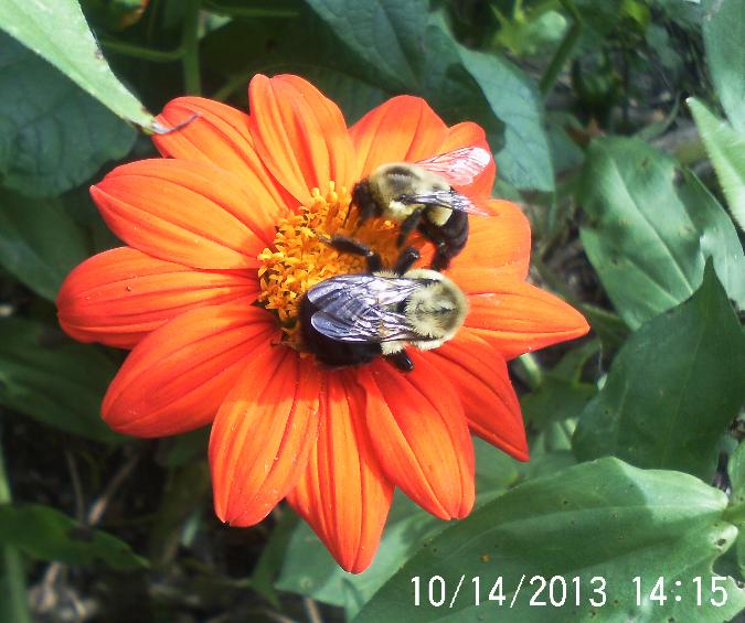 enjoying the beauty while i can, gardening, pets animals