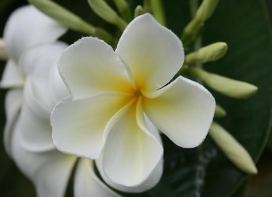 Tropical Flowers in My Garden