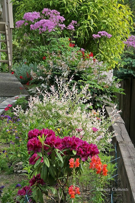 re landscaping to shrubs and perennials, flowers, gardening, landscape, perennial, succulents
