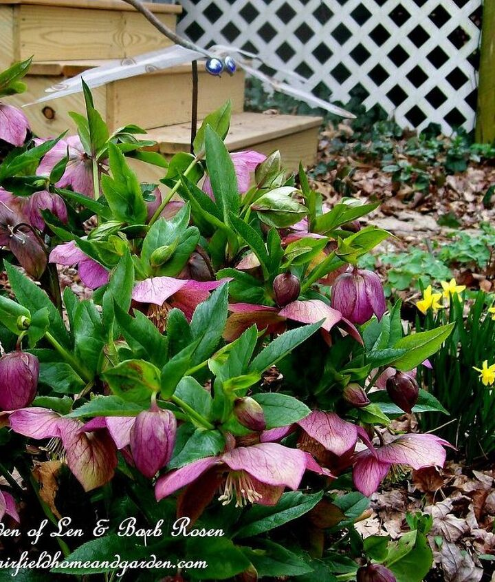 Hellebores, tete a tete narcissus and a copper tubing dragon fly