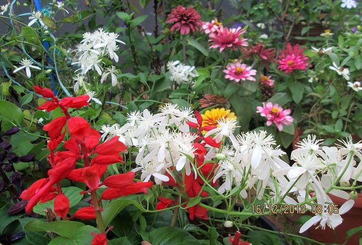 white bridal bouquet with red salvia, gardening