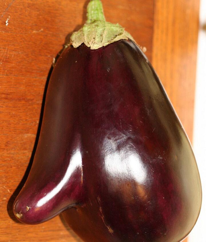 eggplant nose